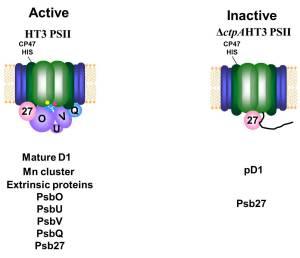 PSII Comparison