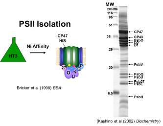 PSII isolation