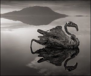 Image by Nick Brandt from his book Across the Ravaged Land