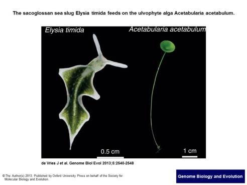 Genome Biol Evol 20132013  5(12) 2540-8, Fig. 1._