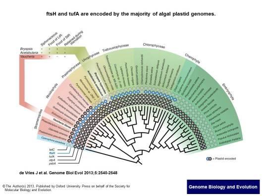 Genome Biol Evol 20132013  5(12) 2540-8, Fig. 3._