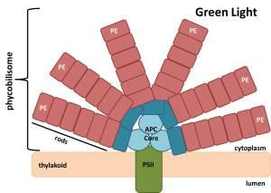 greenlightPBS