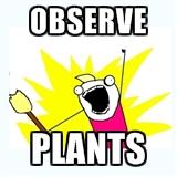 observeplants