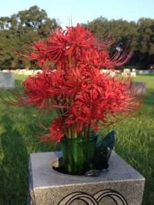 Louisiana Spider lilies Credit: Johnna Roose